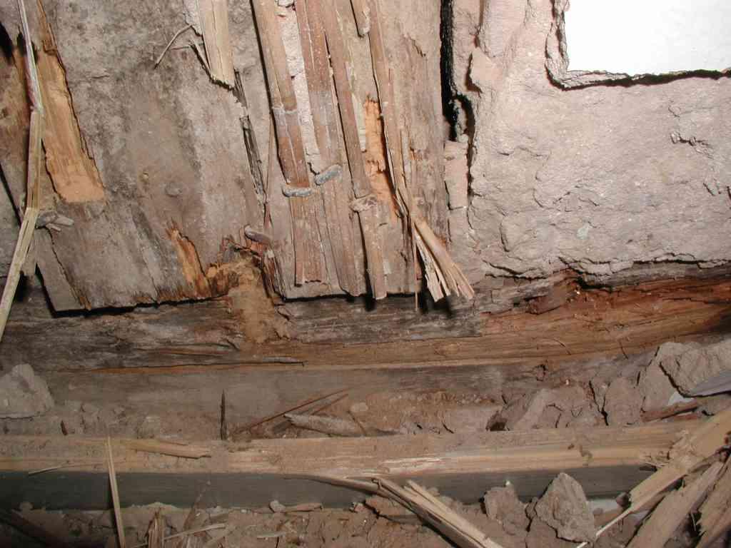 Hausbock im Innenfachwerk